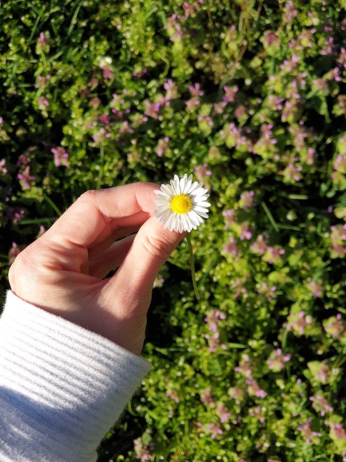 daisy held in left hand over floral background